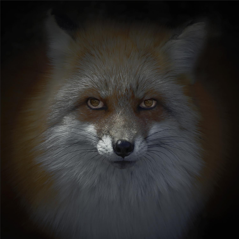 10. Luke Hardy Foxfires (Kitsune) untitled [kitsune-bi X] 2017 60x60cm.jpg