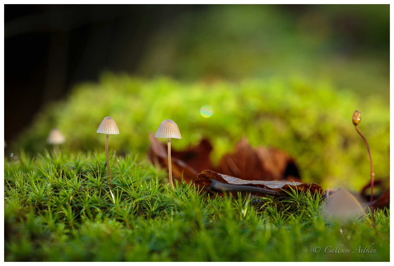 Mini Fungi