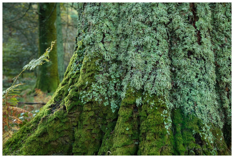 Moss vs. Lichen