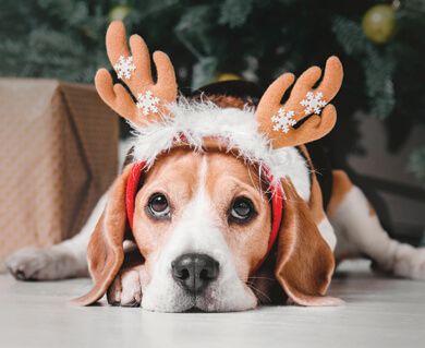 Christmas-Pets.jpg