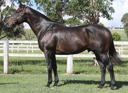 - longhornArguably one of the best Danehill bred stallion standing in Queensland. By Champion sire Danehill from stakes winning mare Fitting (by Marscay). Full brother to Golden Slipper winner and successful sire Catbird.Service Fee: Longhorn $3300 inc GST payment upon live foal or free return (conditions apply)