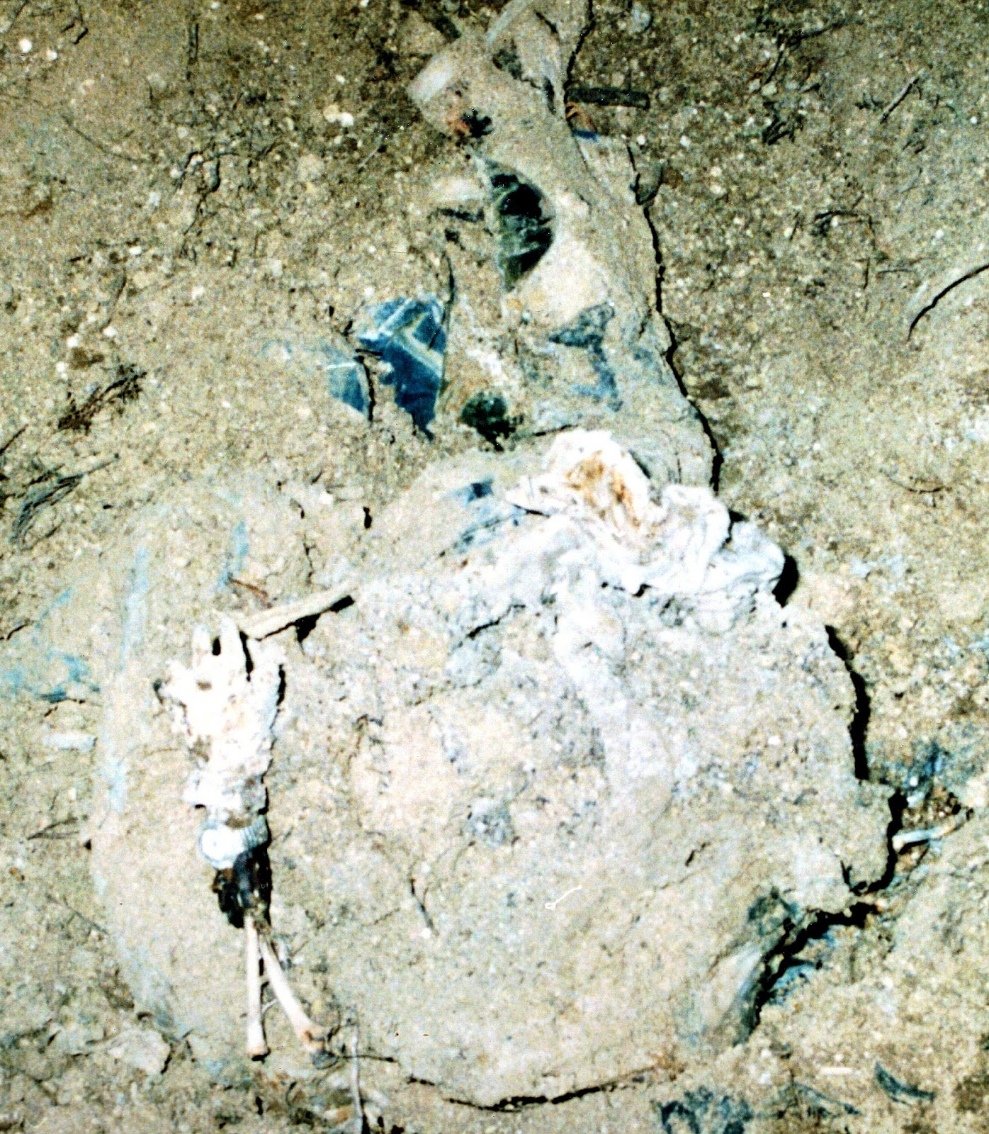 The photo taken of the bodies as they were discovered