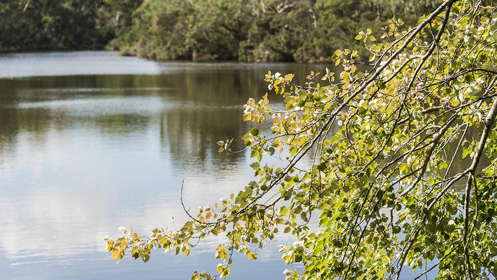 Blackburn Lakes Sanctuary