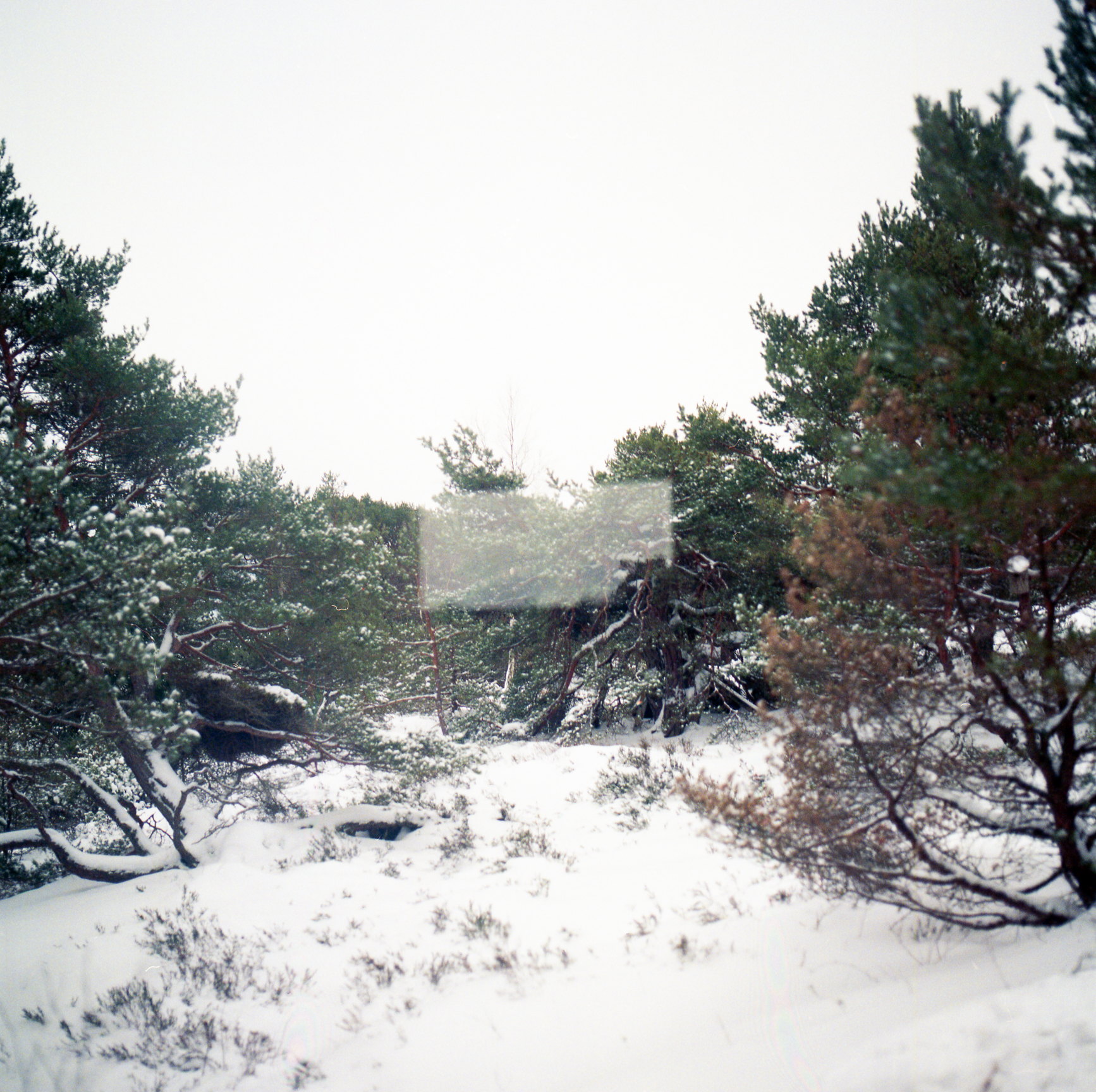 Anemoia-60.jpg