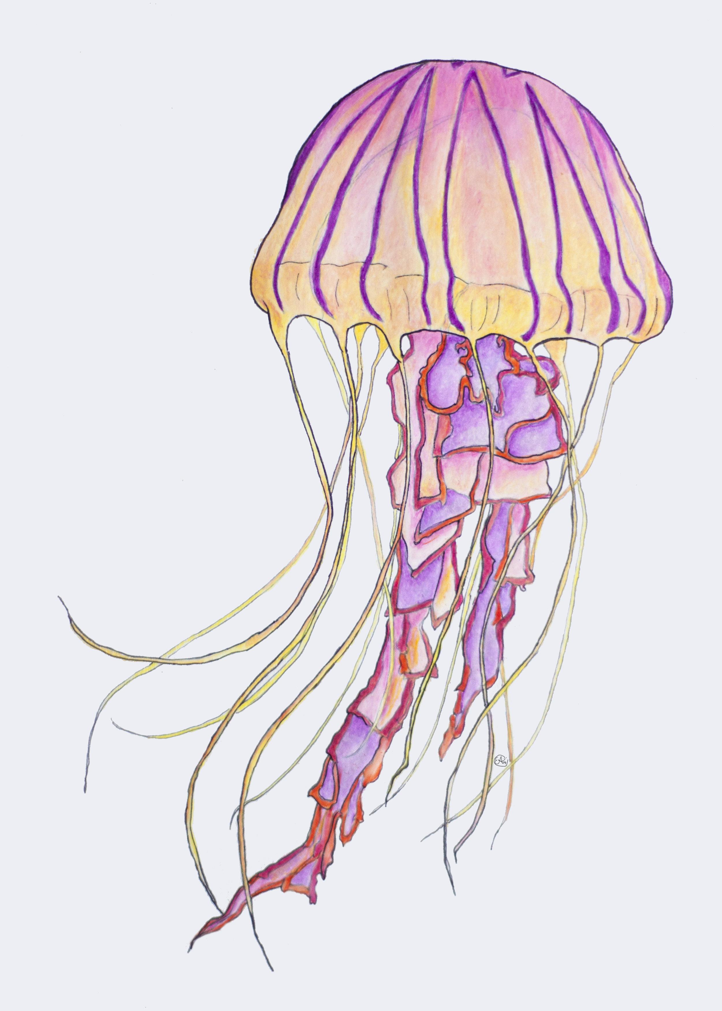 psychedellyfishForPrints.jpg