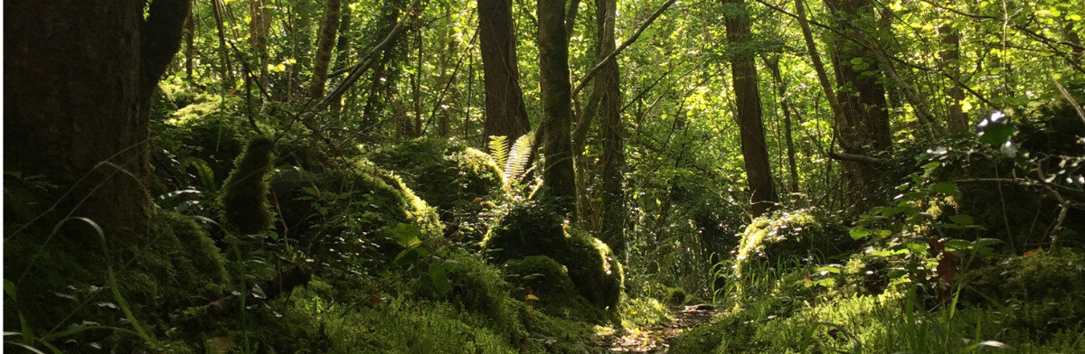 Walk with the Sacred in your Everyday -  Kilcornan, Clarinbridge, Co. Galway