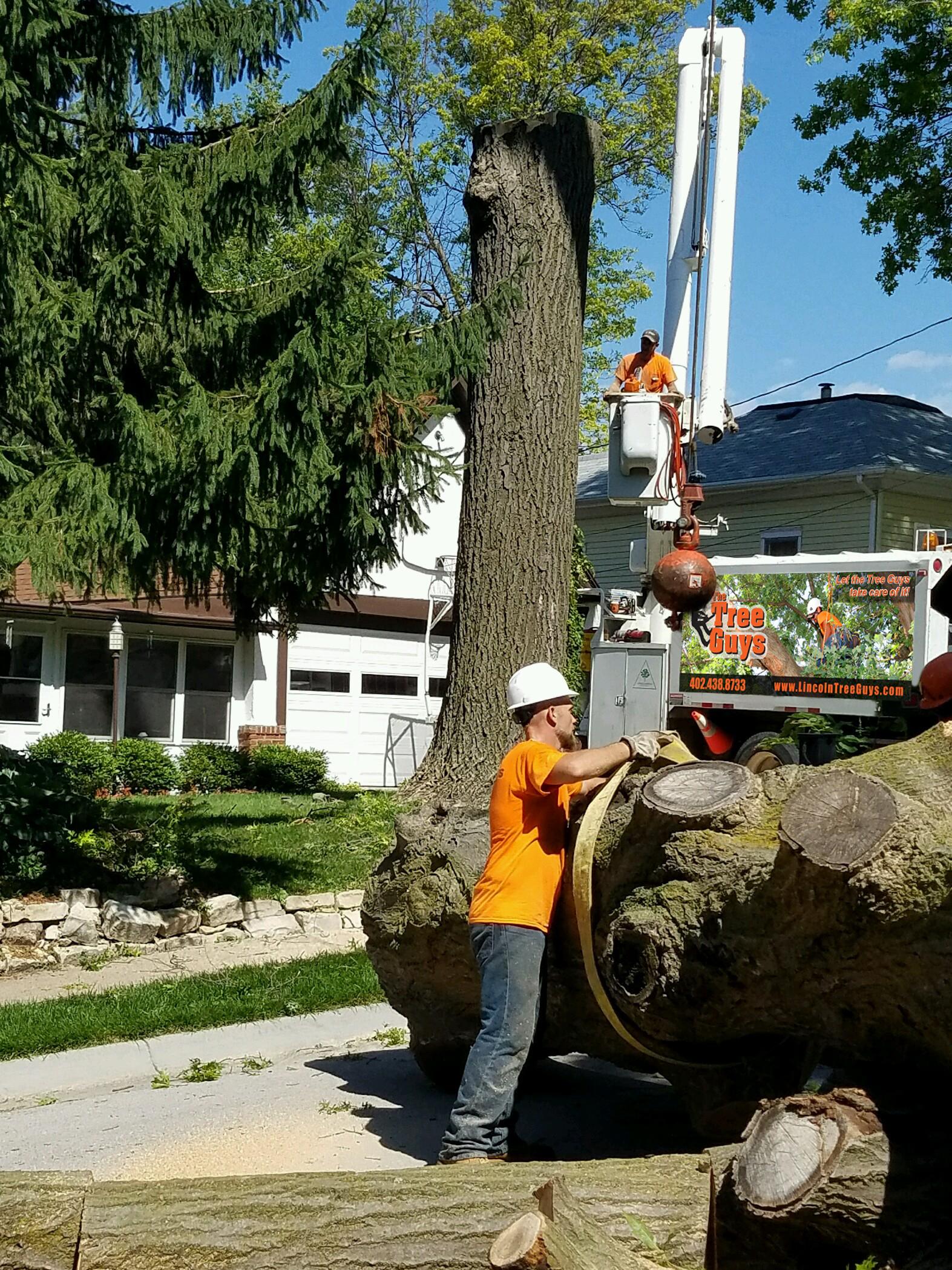 Tree Removal_Tree Guys.jpg