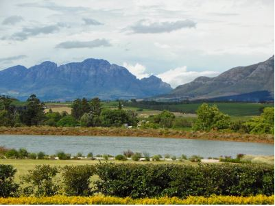 View from a South African Saddlebred horse farm - Saddlebreds originated in Kentucky!