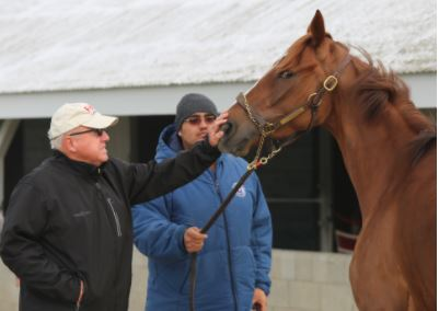 Frank Penn works with one of his Thoroughbreds at Keeneland.