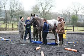 Equine-Assisted Learning for Teams
