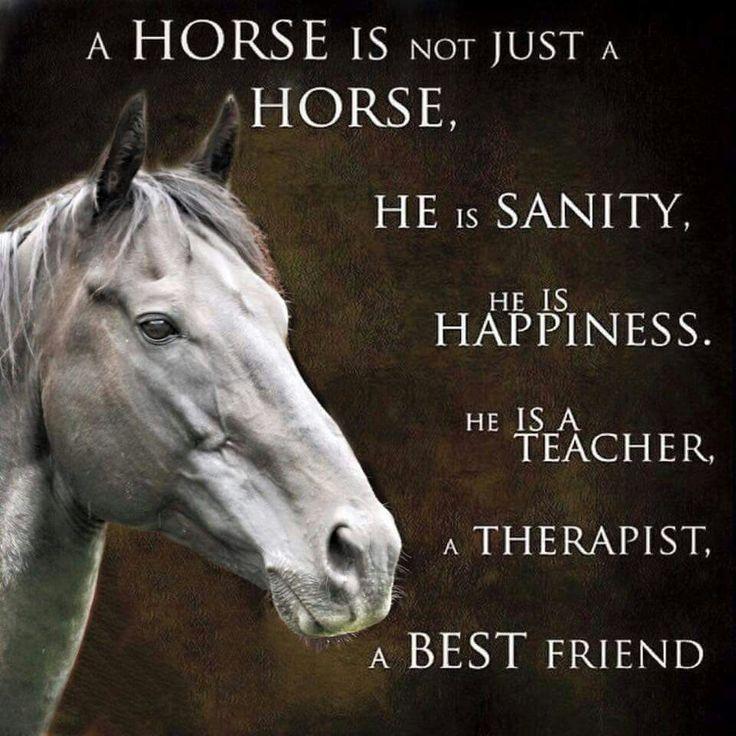 eb2e86782ce7231a98cd0144f4f1e0ee--horse-quotes-horse-sayings.jpg