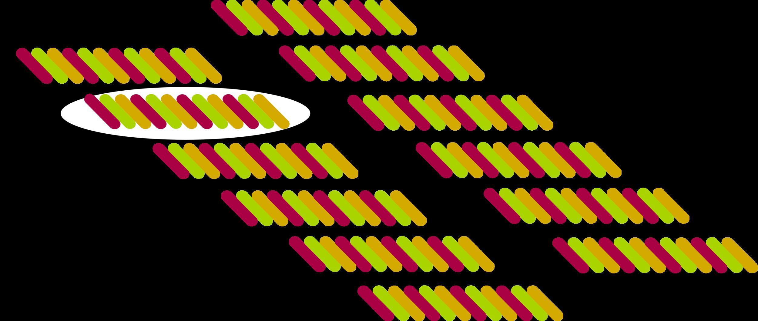 Arrangement of collagen triple helix