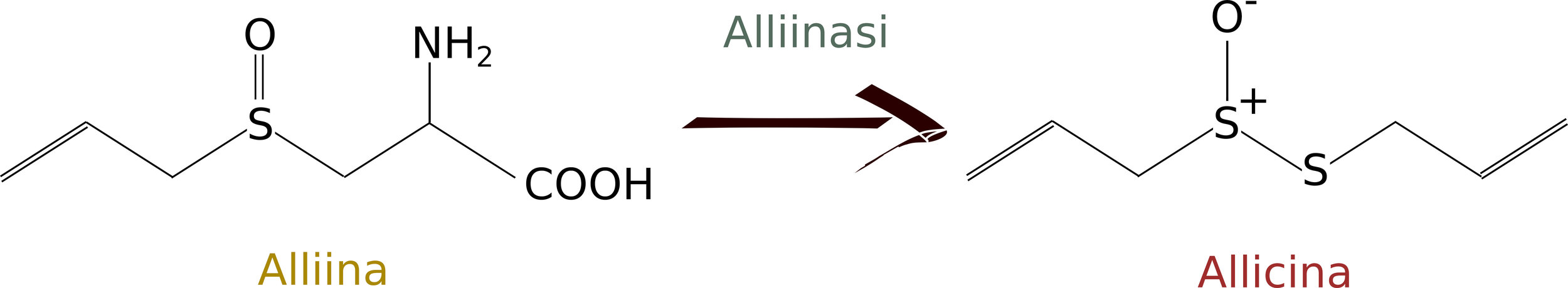 Conversion of alliin into allicin (sorry, I was too lazy to traslate the picture in English :P)