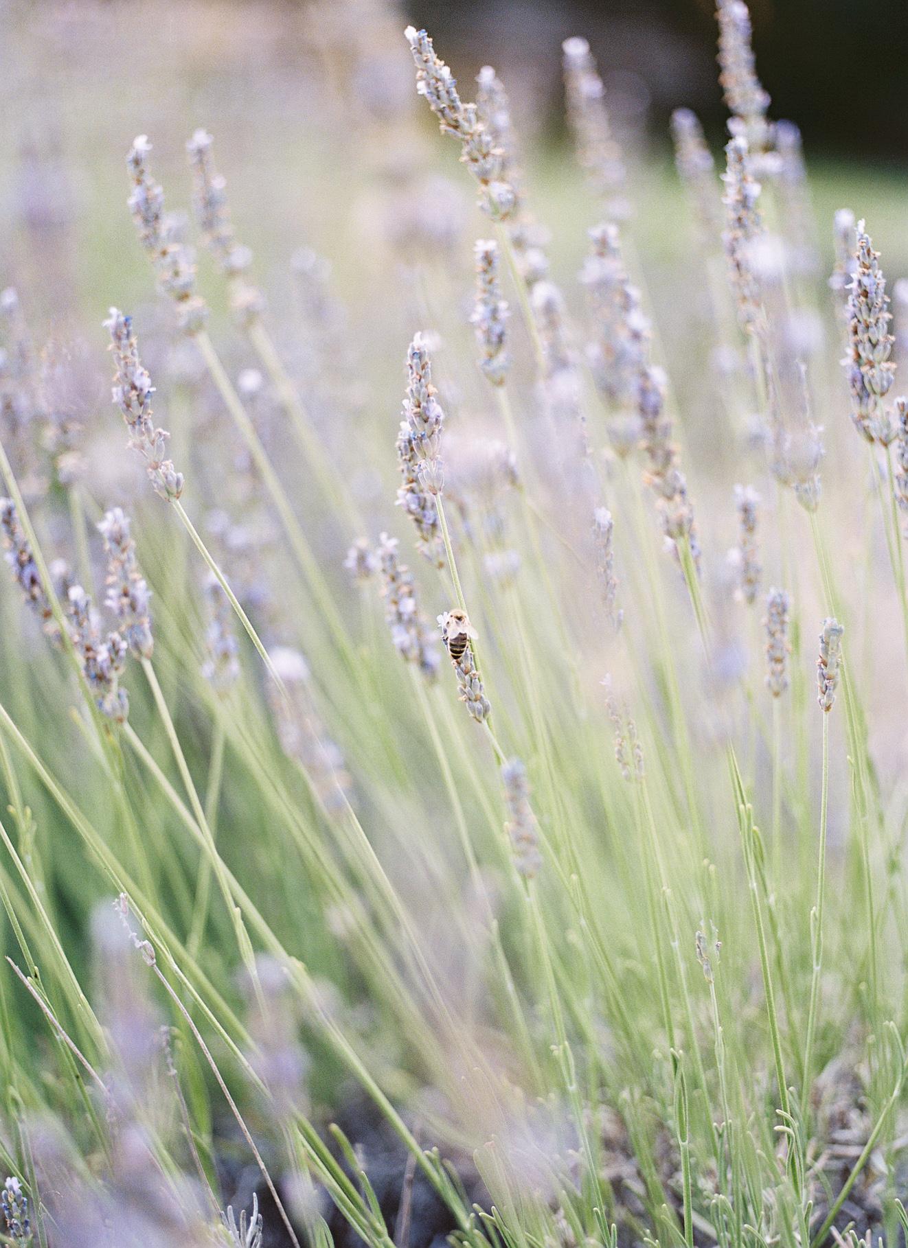Film Lavender-3.jpg