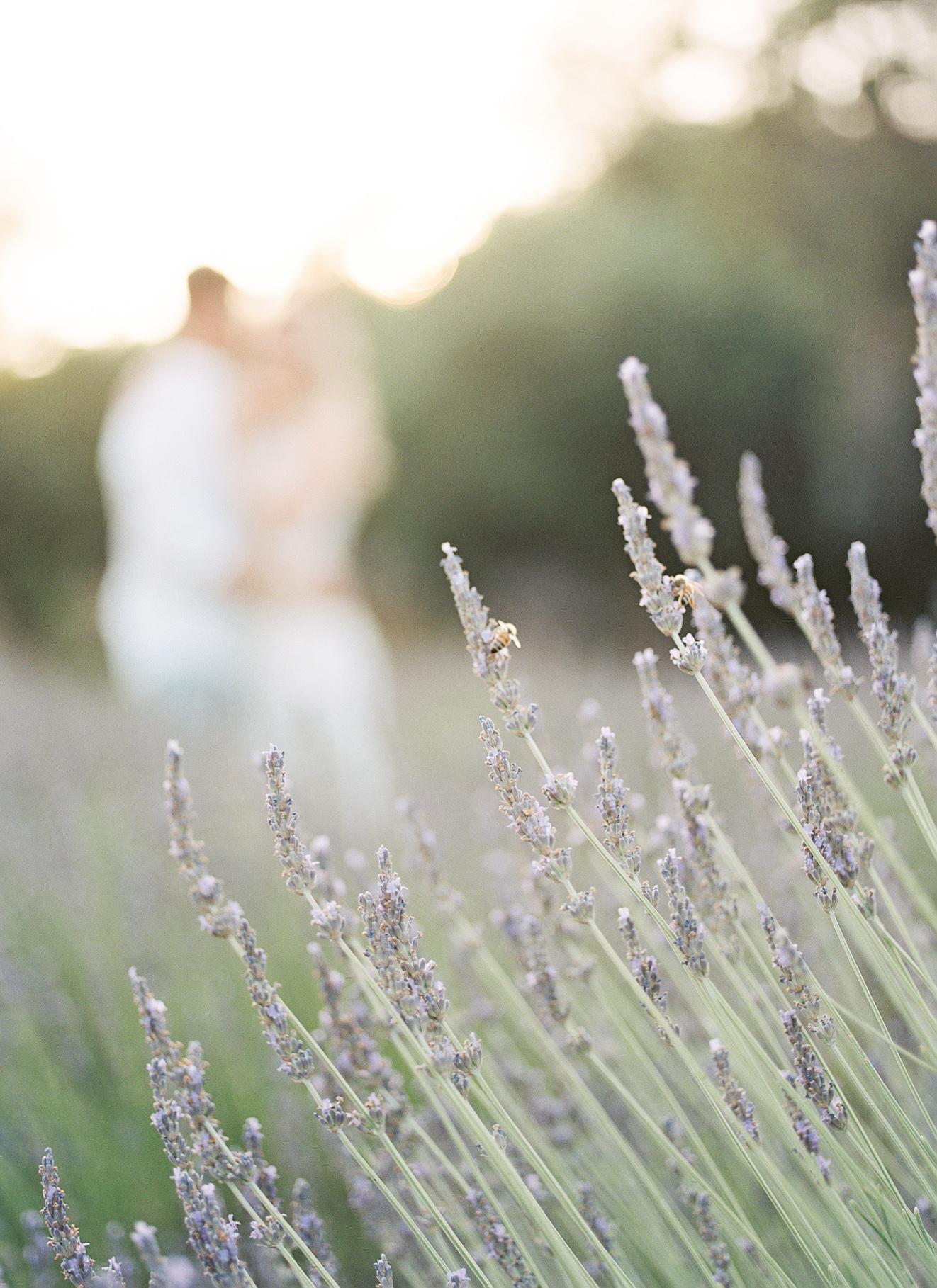 Film Lavender-11.jpg