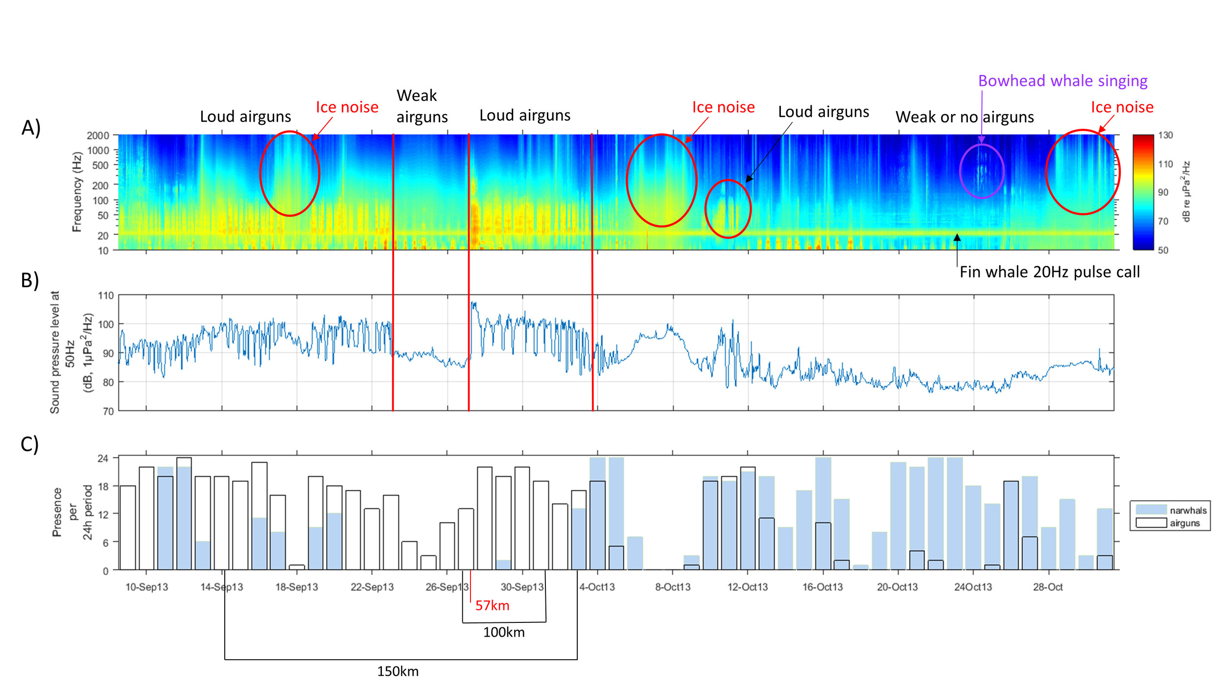 Examples of the data recorded by the AURALS (in this case the Fram Strait AURAL from 10 September to 28 October 2013). Panel A shows loud airgun signals as well as ice noise and bowhead whale and fin whale vocalisations. Panel B shows noises generated by airguns and panel C illustrates the simultaneous presence of airguns and narwhals. At the bottom of panel C, the distances between survey vessels and the recorder are given. Ahonen et al. unpublished data