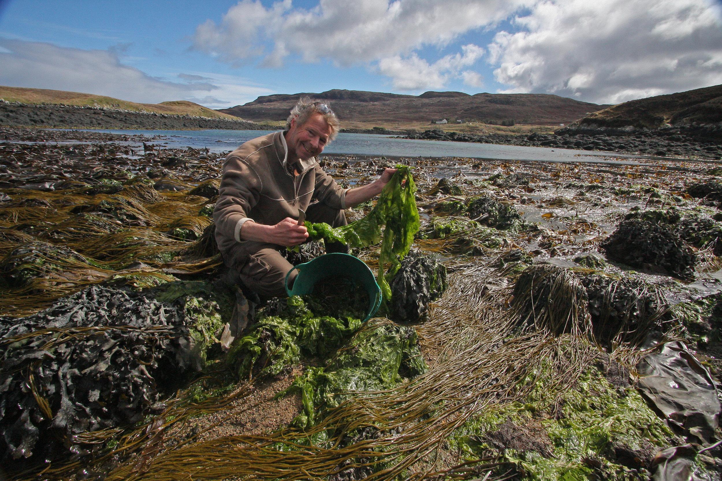 John Cunningham, JONAA's Marine Science Editor collecting seaweed in the Scottish Hebrides. JONAA©John Cunningham