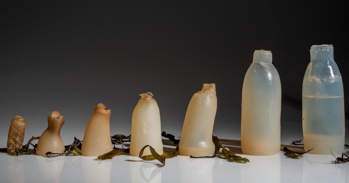 biodegradable-algae-plastic-replacement-ari-jonsson-raw.png