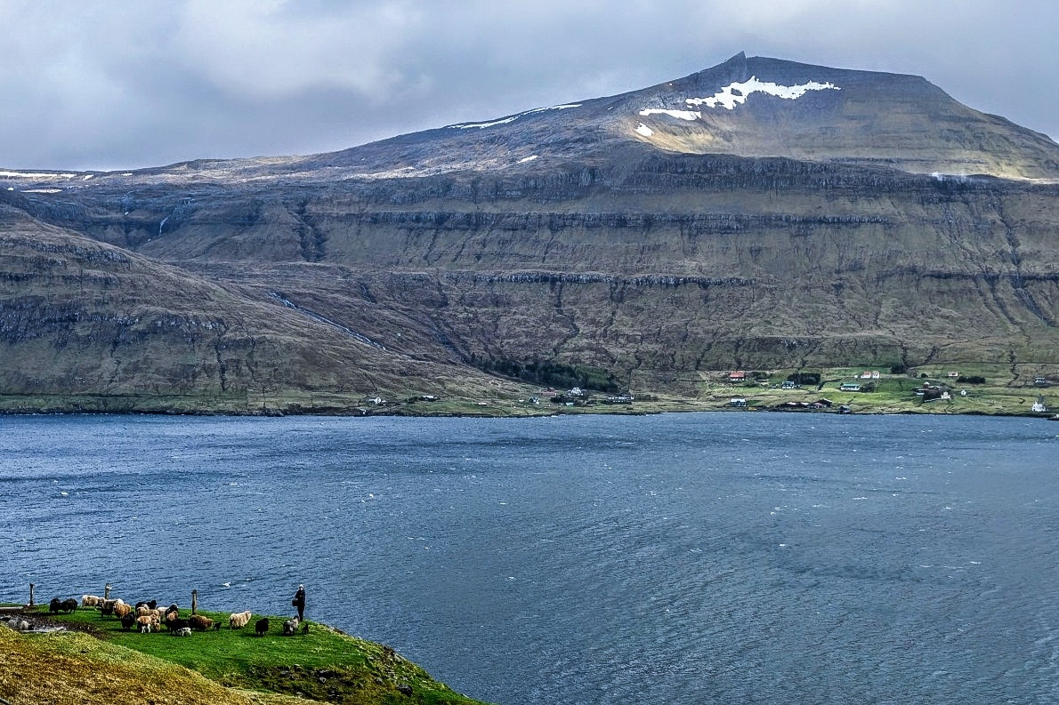 A shepherd tending to his flock in the Faroe Islands in the year 2018. JONAA©Mia Bennett