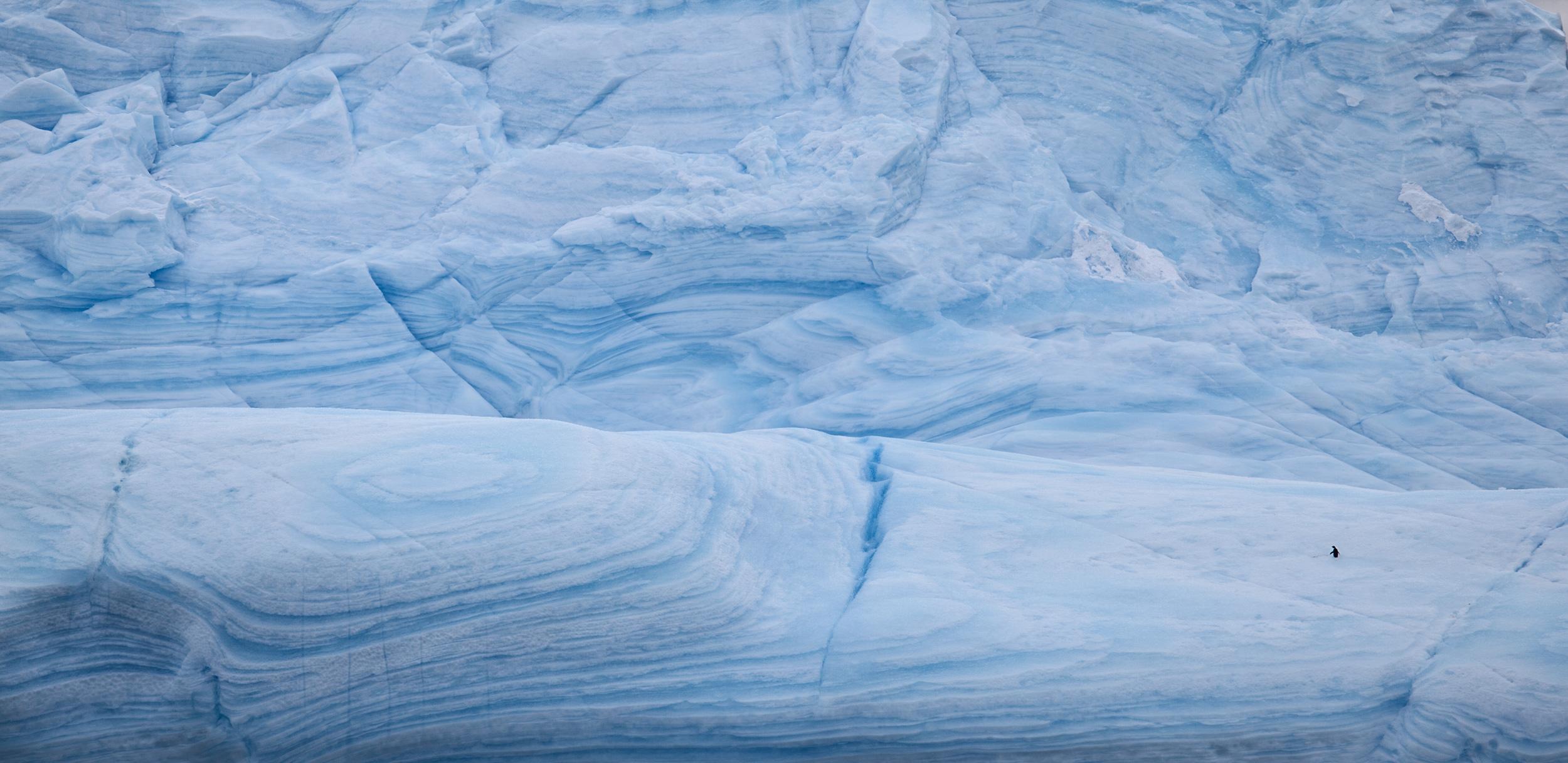 A single penguin on Antarctic ice.   JONAA©Ragnar Axelsson, RAX