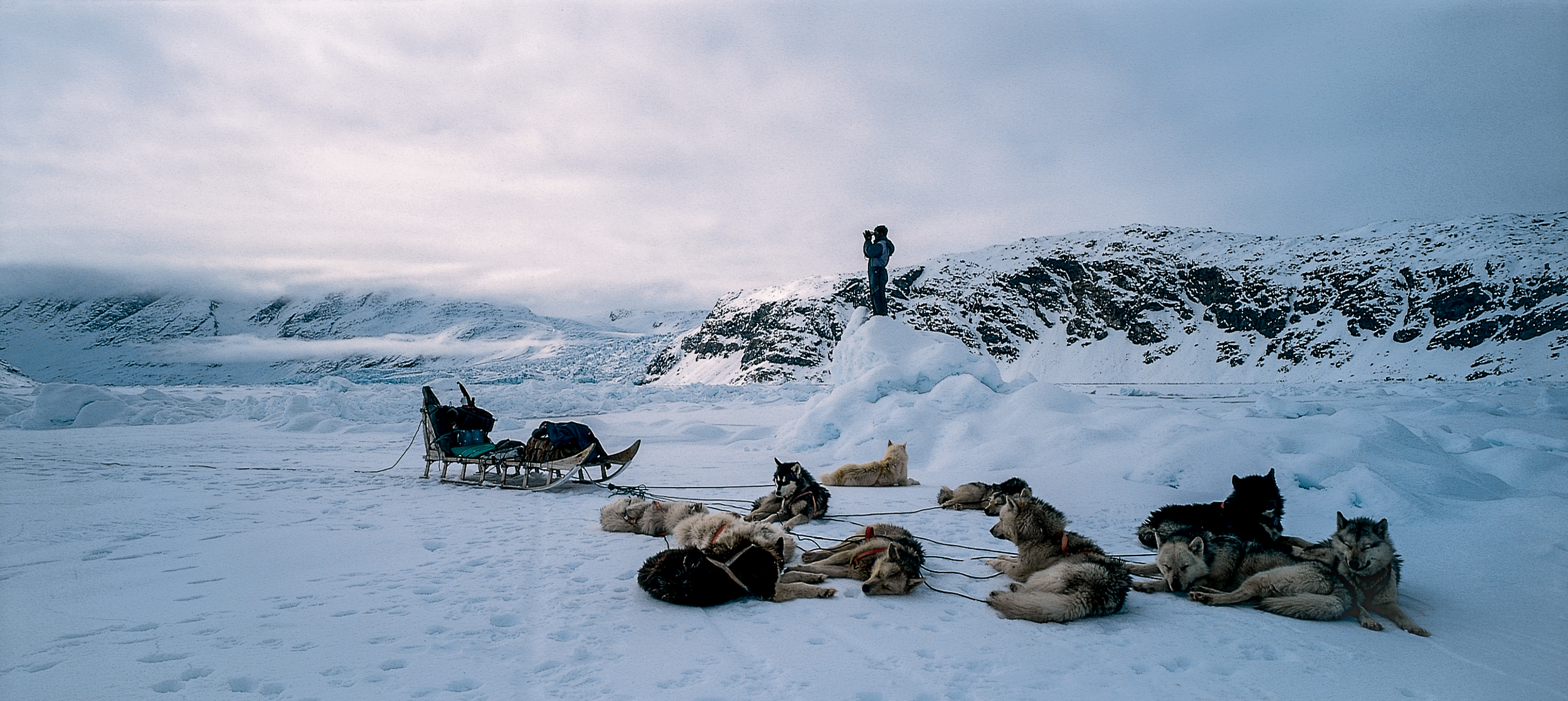 Following the footprints of a polar bear. Ulrik Sanimuinaq with his dogs on sea-ice in arctic wilderness, two days from the nearest habited settlement.  JONAA©Kristjan Fridriksson