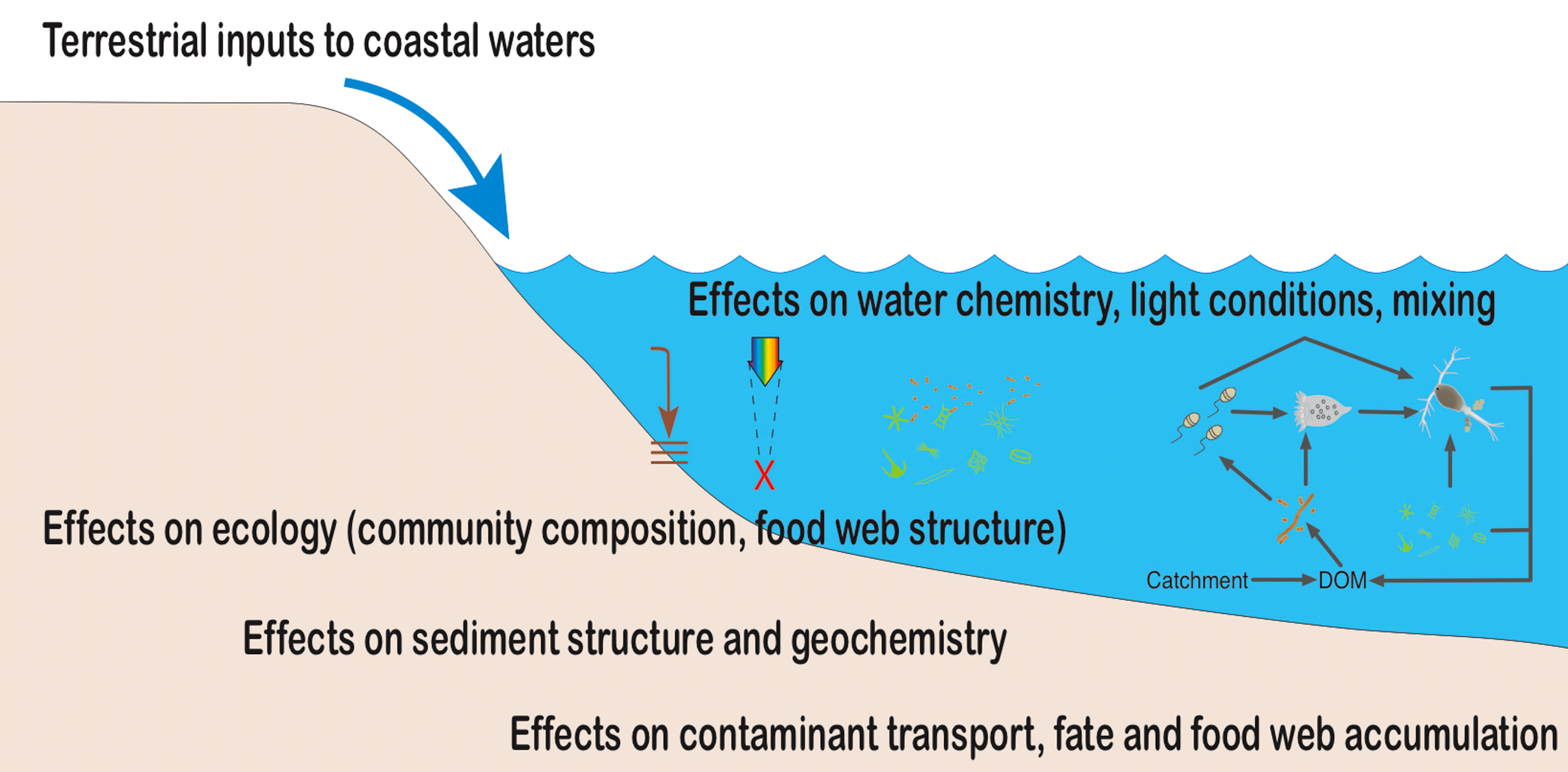 Conceptual framework for how terrestrial inputs can affect coastal biogeochemistry, ecology and contaminant dynamics. DOM = dissolved organic matter
