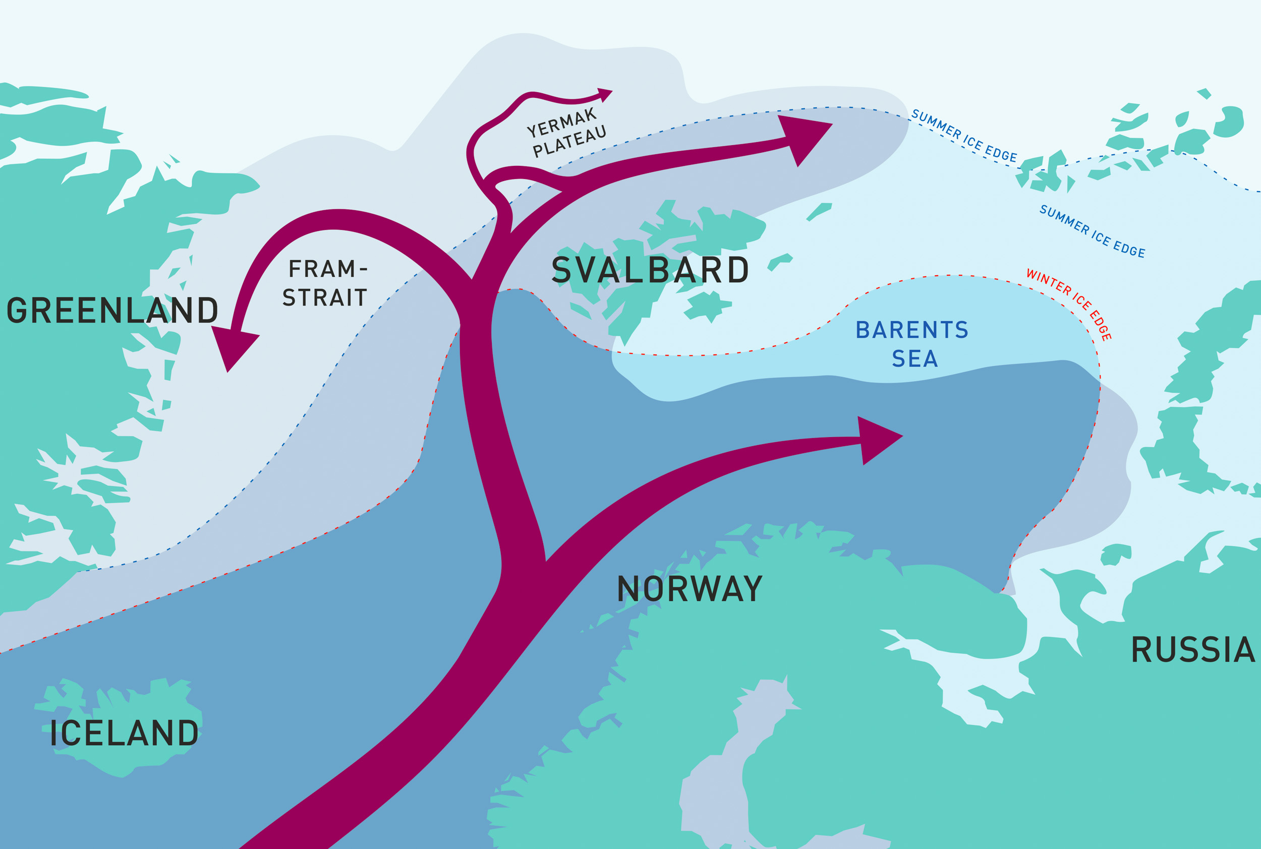 Warm water flowing north from the Atlantic Ocean splits into several branches. A large part follows the seafloor topography north of Svalbard to the east and continues into the Arctic Ocean. Illustration©Reibo/Arild Sundfjord, Norwegian Polar Institute & Angelika Renner/Institute of Marine Research.