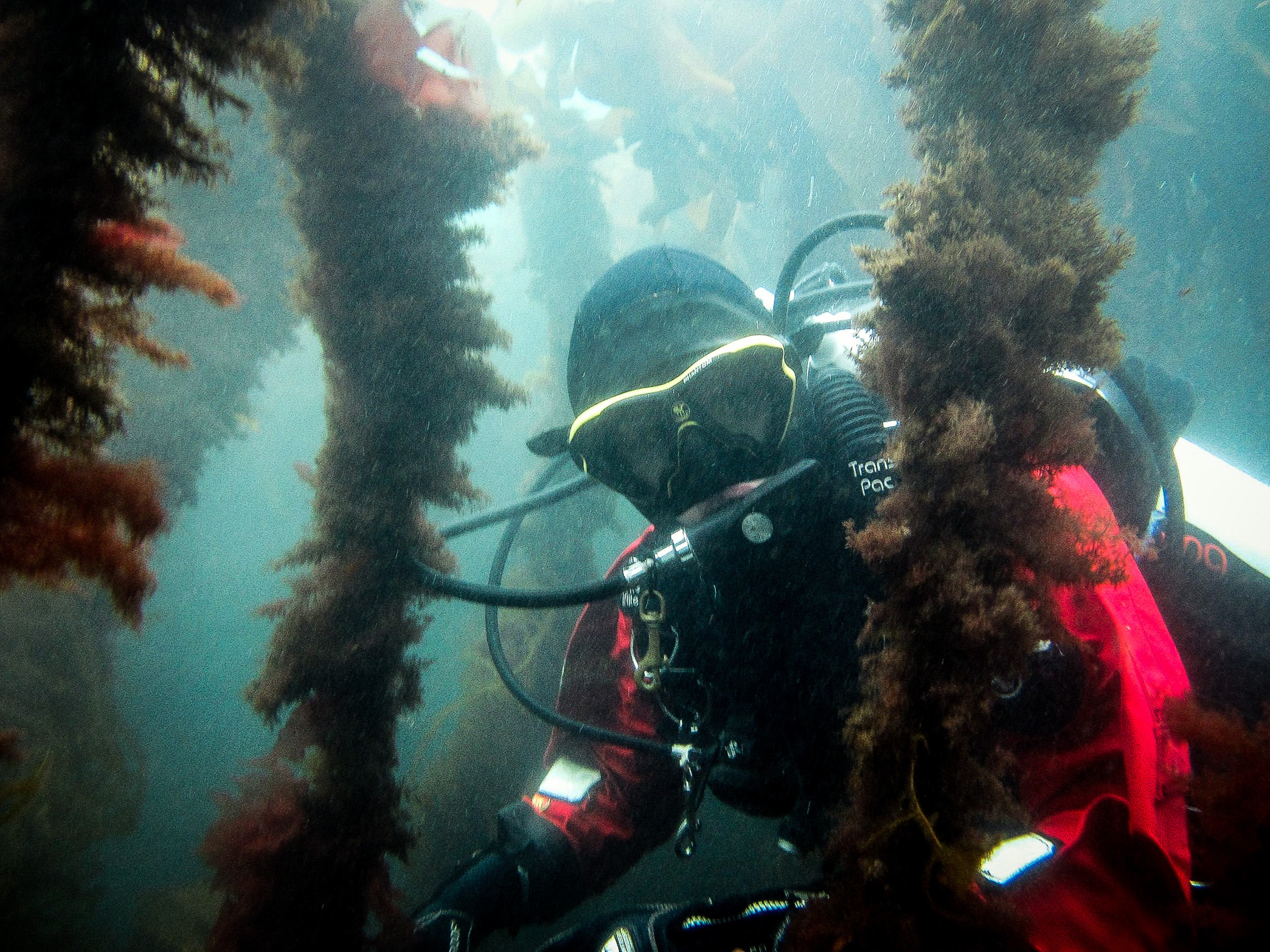 Seaweed may hold a solution to a part of the problem.