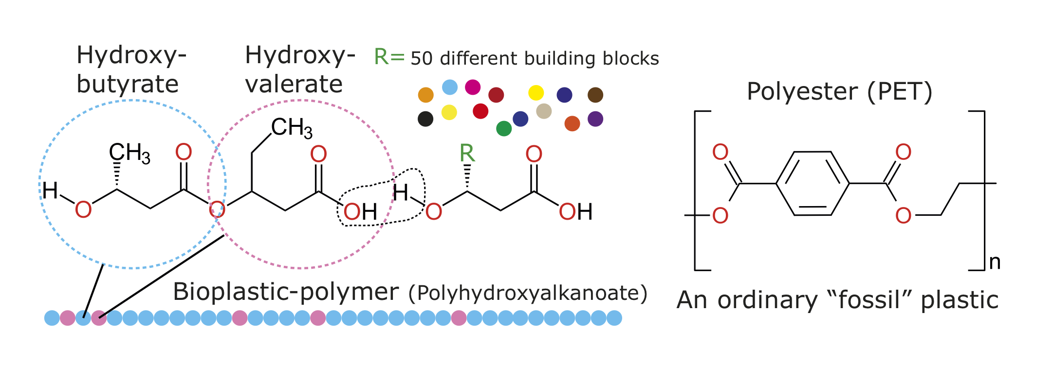 "Biodegradable polyhydroxyalkanoate (left) and conventional polyester (right) are similar in structure. The ""R"" group in the PHA molecule represents a wide range of chemical substituents that can give the polymer different characteristics. Ordinary plastic is highly resistant to breakdown by microorganisms."