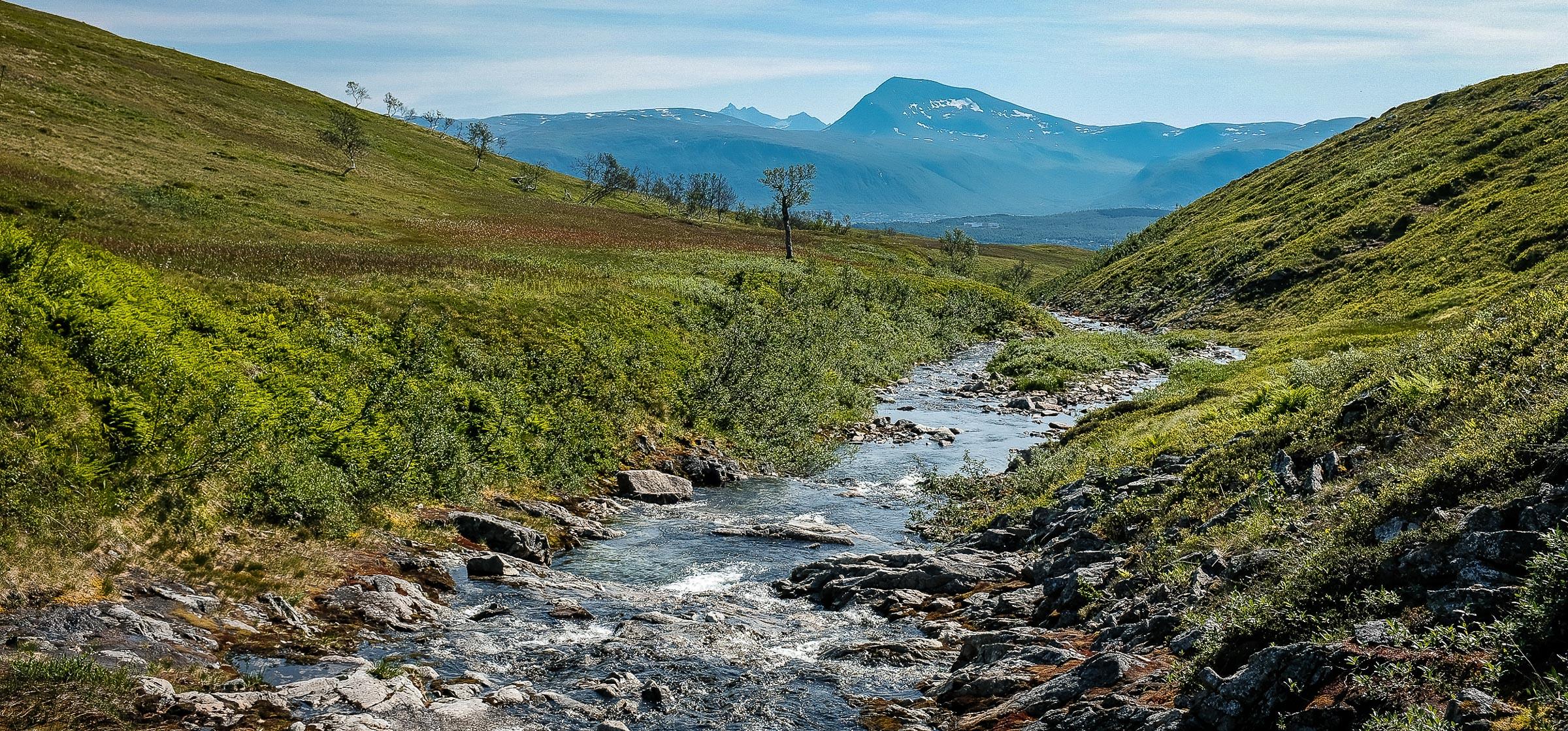 Arctic wetlands.  JONAA©Linnea Nordström
