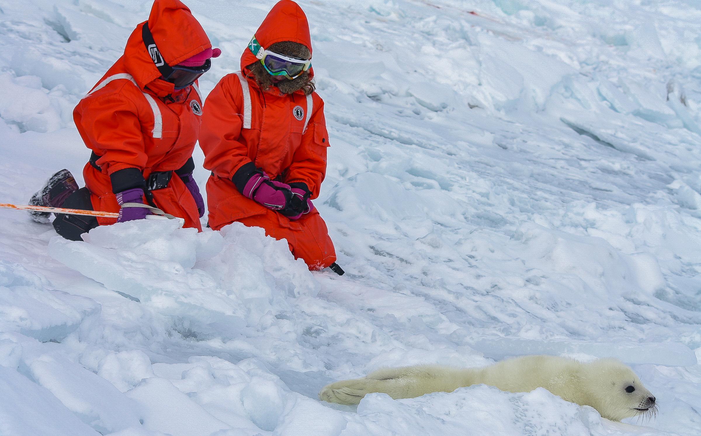 Sealtourism JONAA @Andrea King-5958.jpg