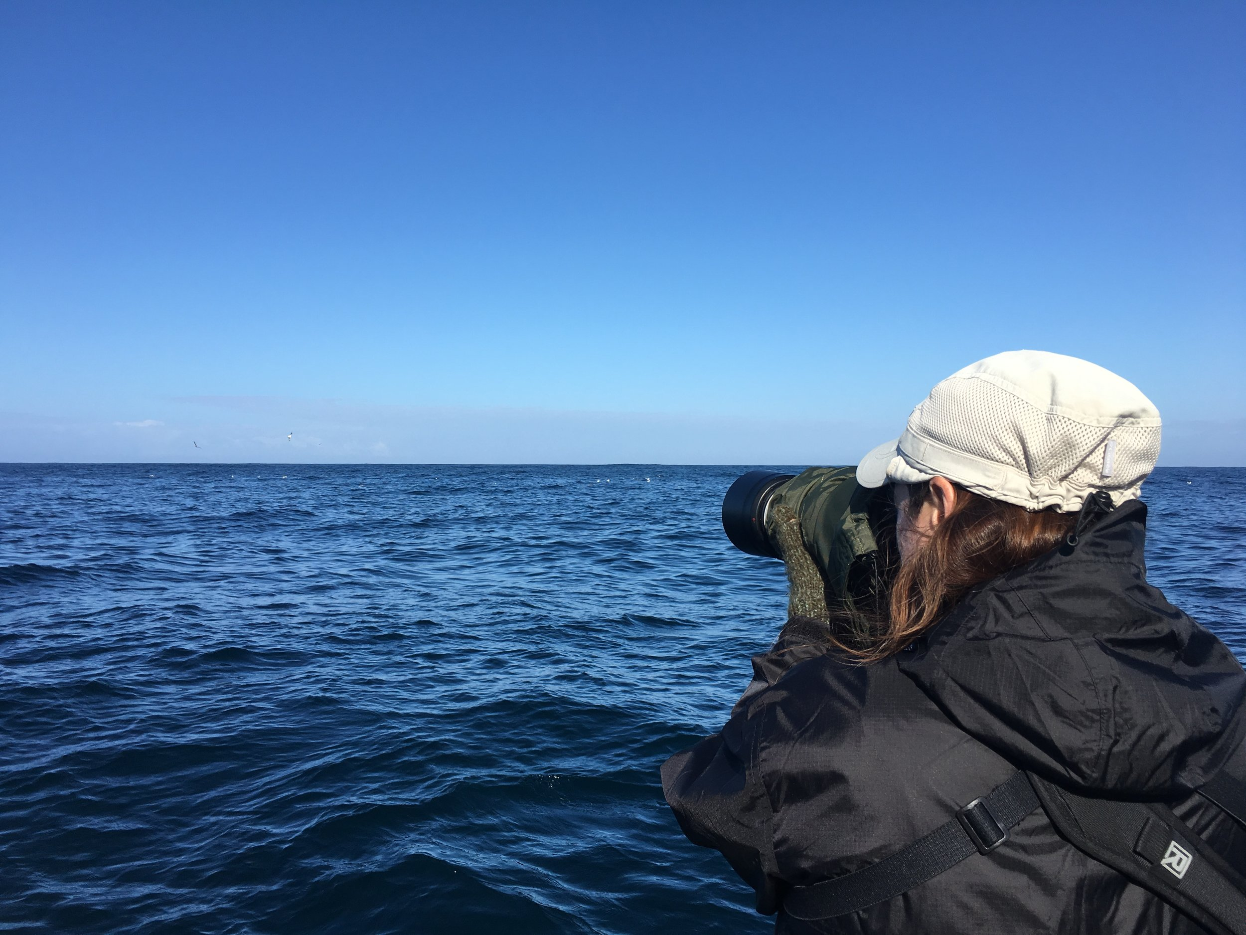 Pelagic Tour participants spotted 12 off-shore species on the tour, as well as a Humpback whale.  Photo by Lila Bowen