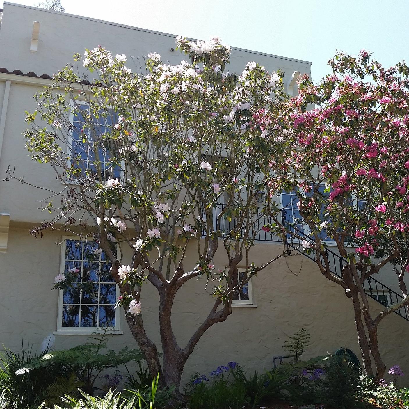 2900 Garber St.  Berkeley, CA  Represented Seller    Insight Realty  DRE| 01876241
