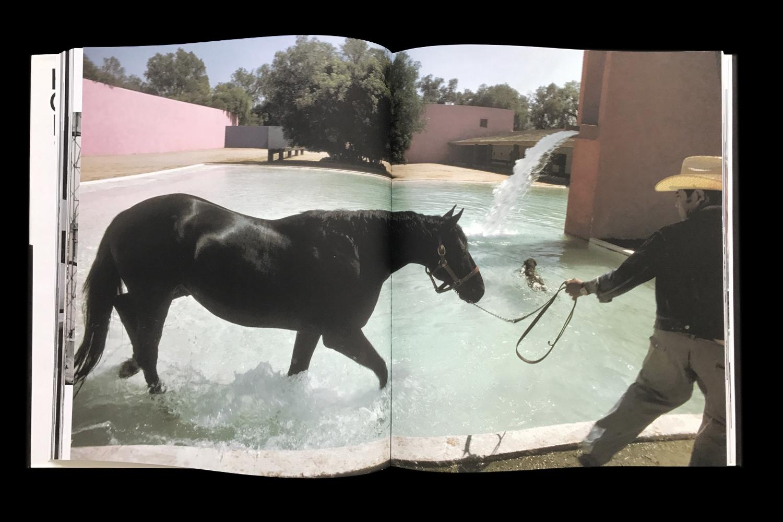 KK-Horse-6.jpg