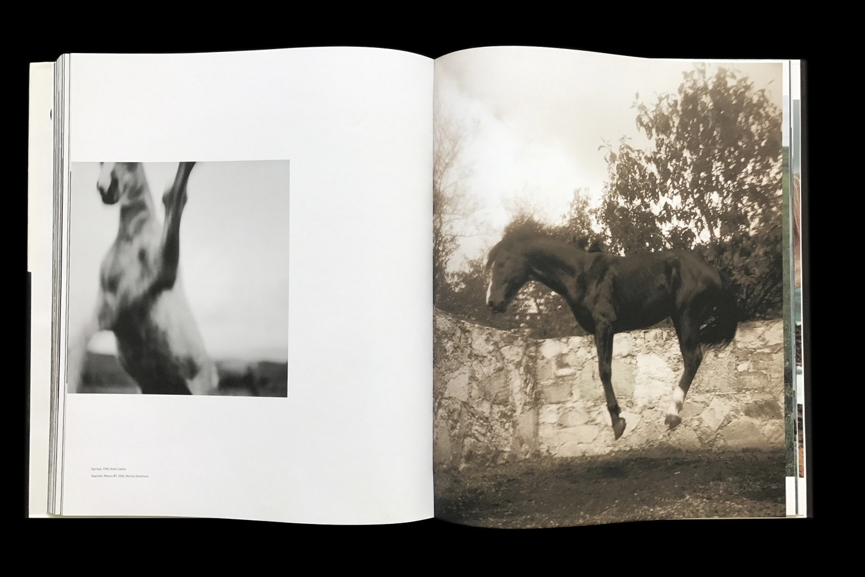 KK-Horse-7.jpg