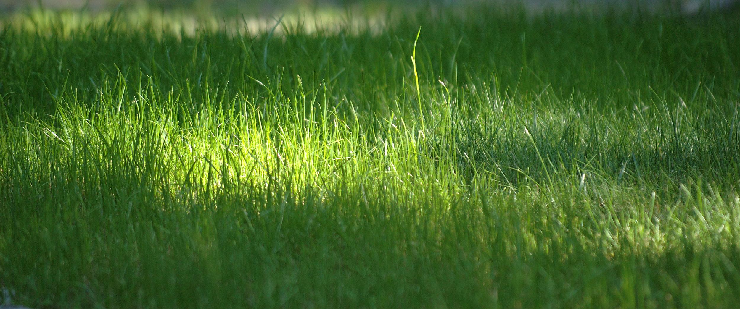 Grass-Sermon.jpg