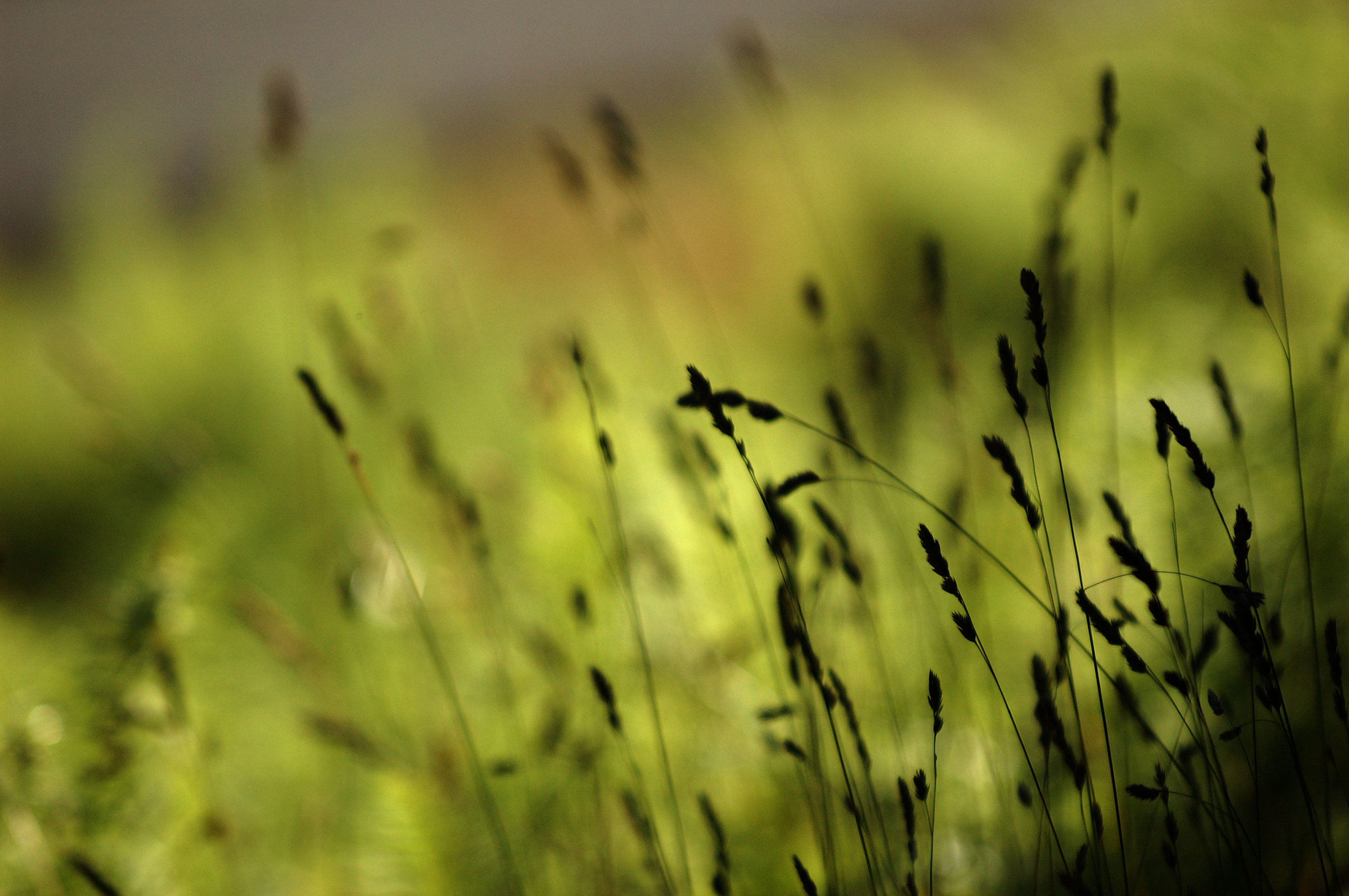 Light-and-Dark-Grass.jpg