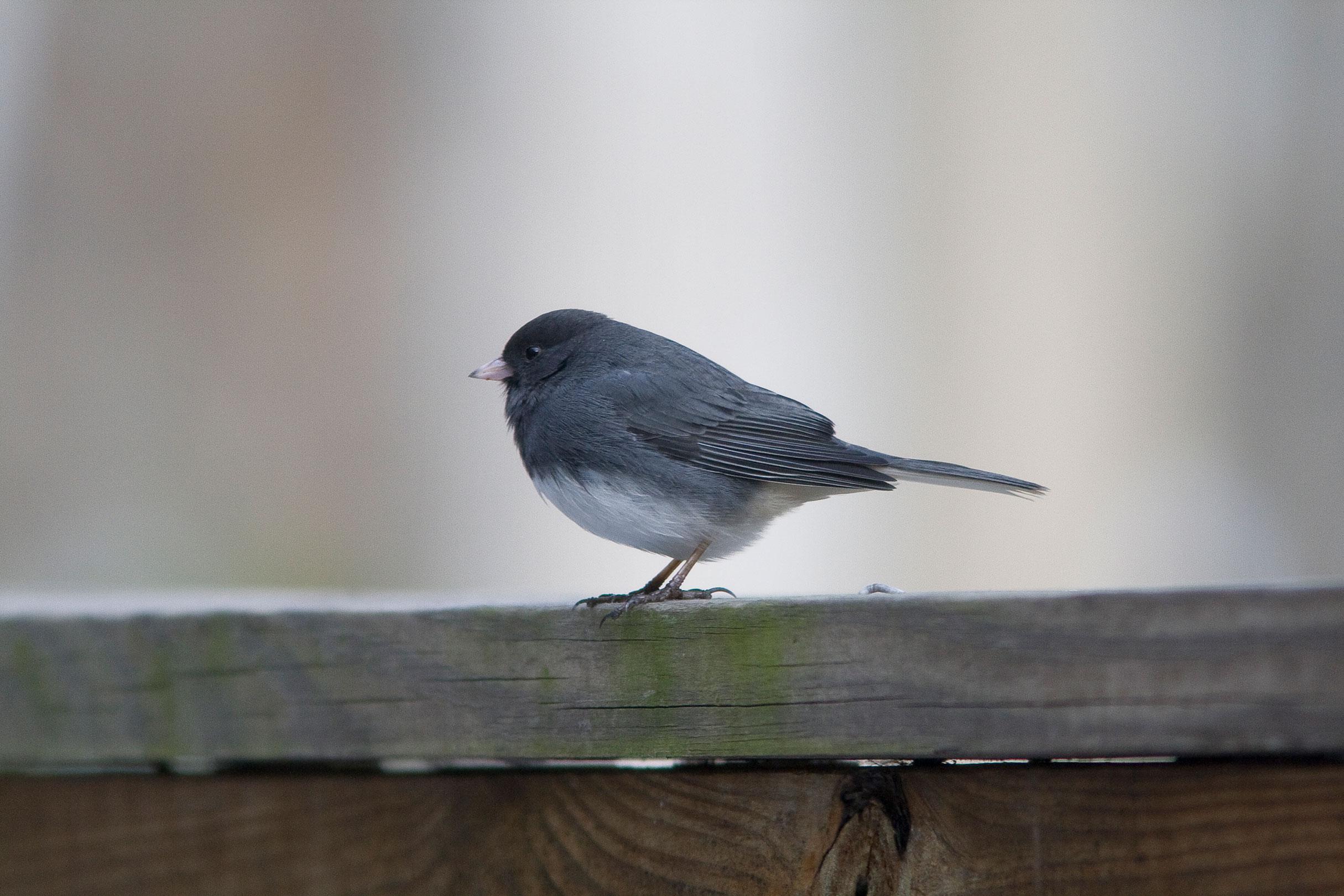 Bird-Portrait.jpg