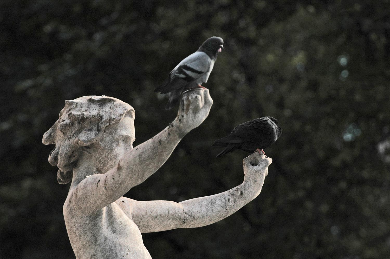 Statue Honoring Birds.jpg