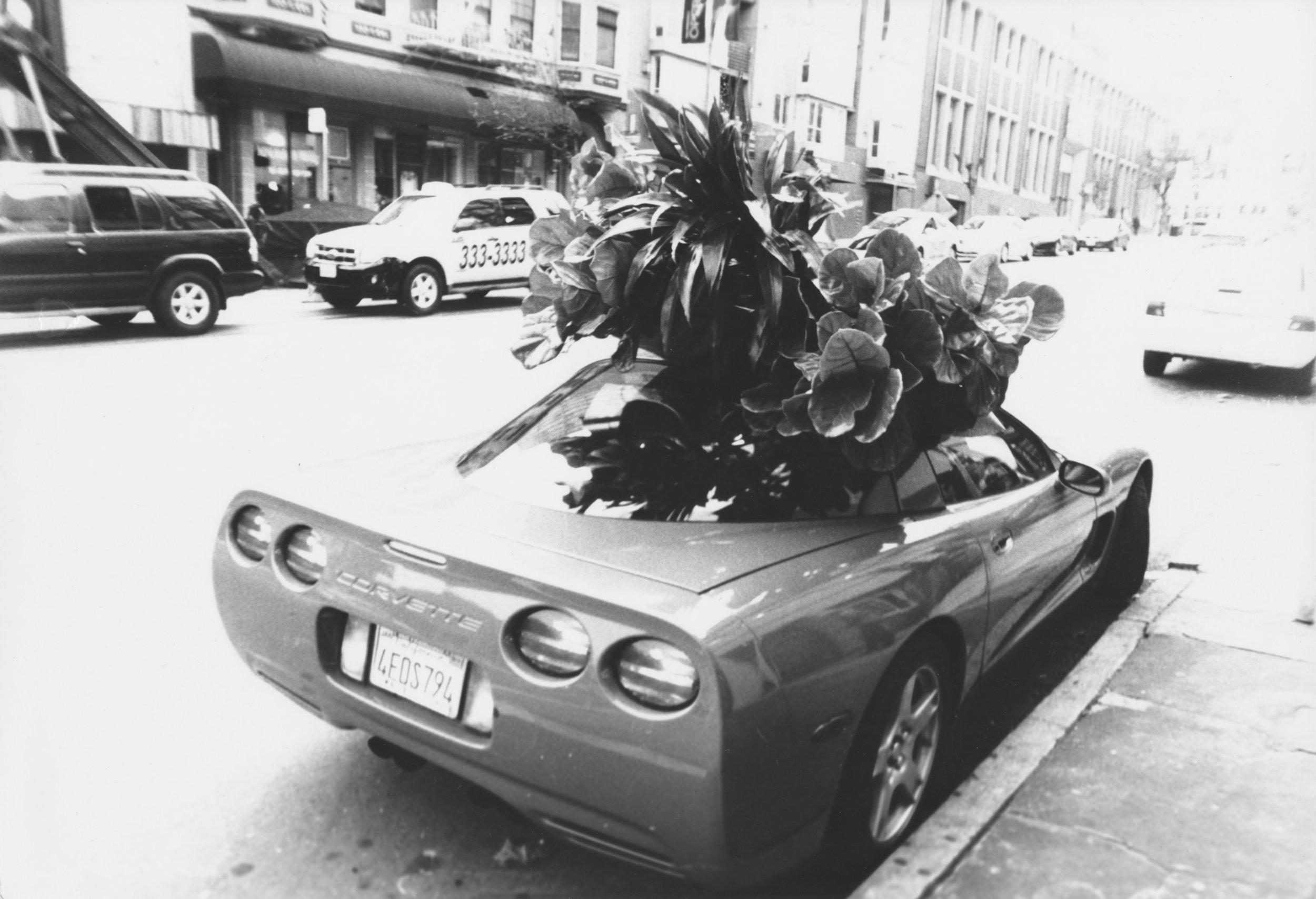 car-tree-hat.jpeg