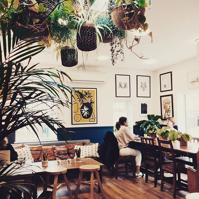 Thanks @kelseykitharrington for your great pic and your kind comments. Hope to see you again soon. #swallowcoffeeshop #goldhawkroad #shebu #shepherdsbush #greenery #houseplants
