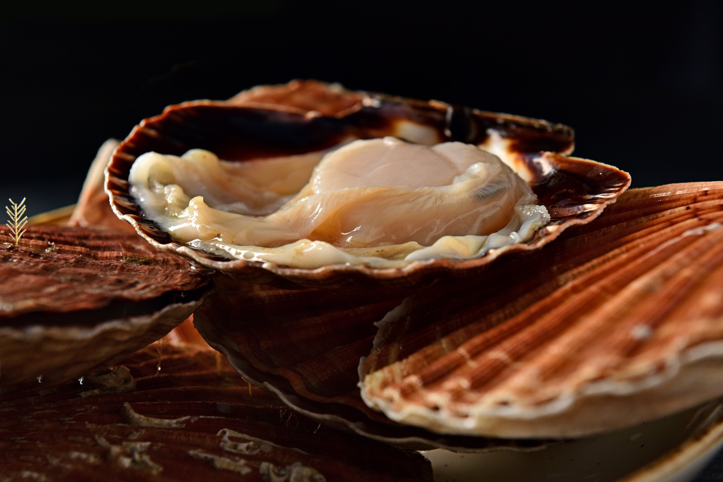 18 brasserie juste restaurant Dikkelvenne tablefever bart albrecht culinair fotograaf foodfotograaf.jpg