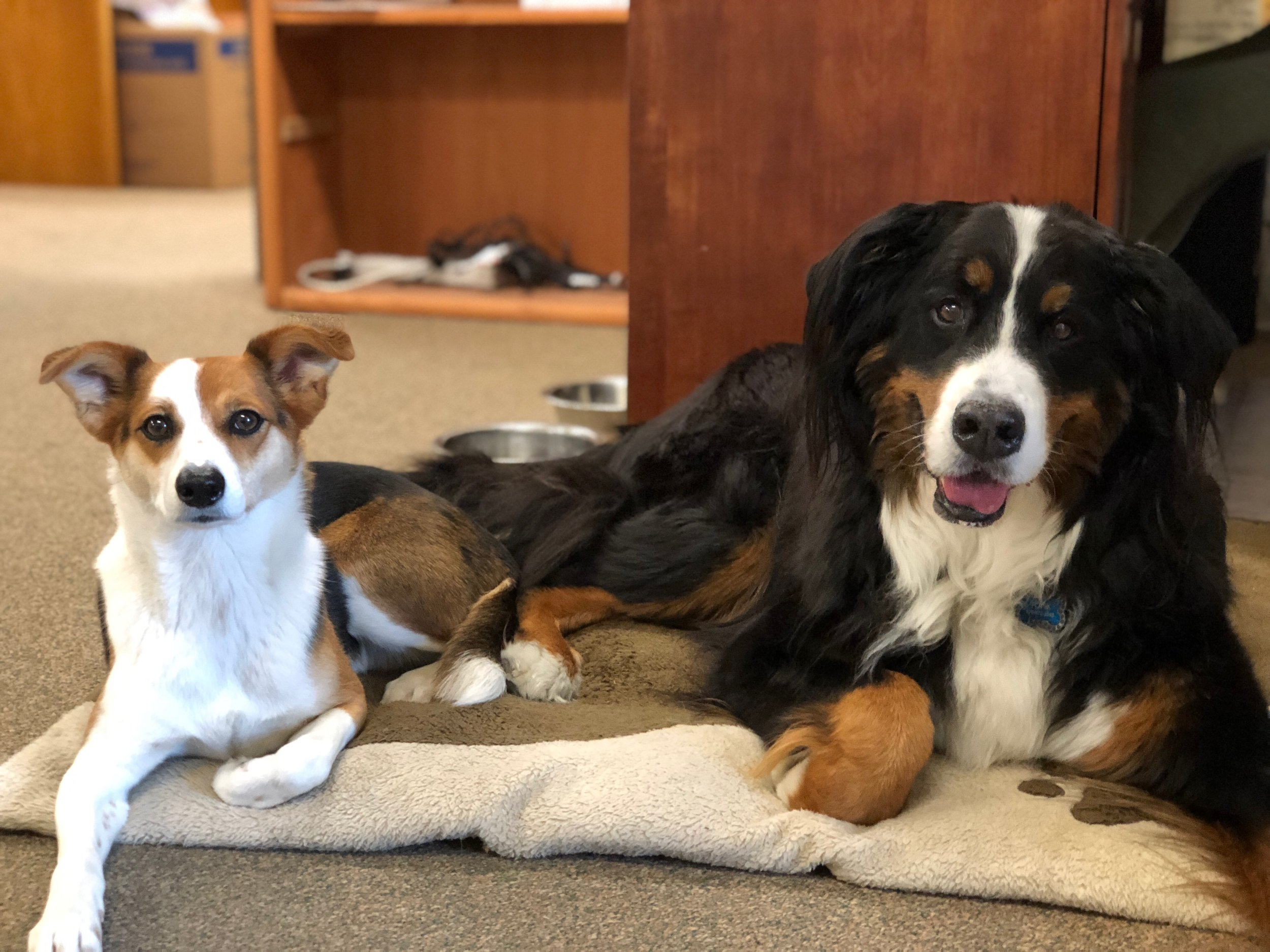 Lucy and Tonk: Podcast A Vet resident Mascots