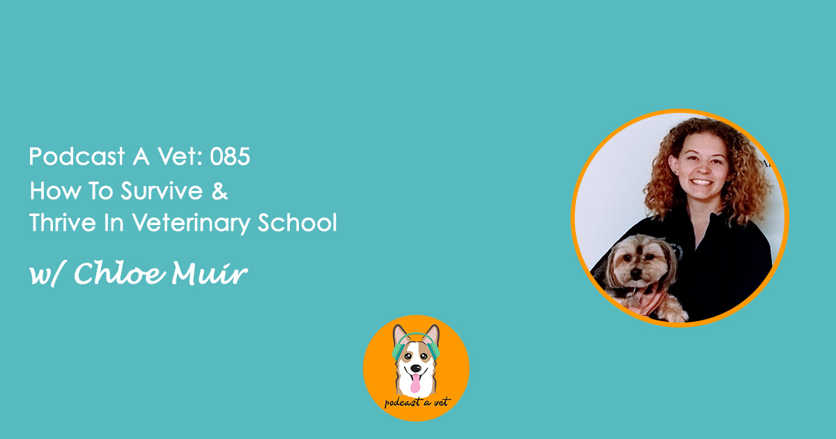 Podcast A Vet 085: How To Survive & Thrive in Veterinary School w/ Chloe Muir
