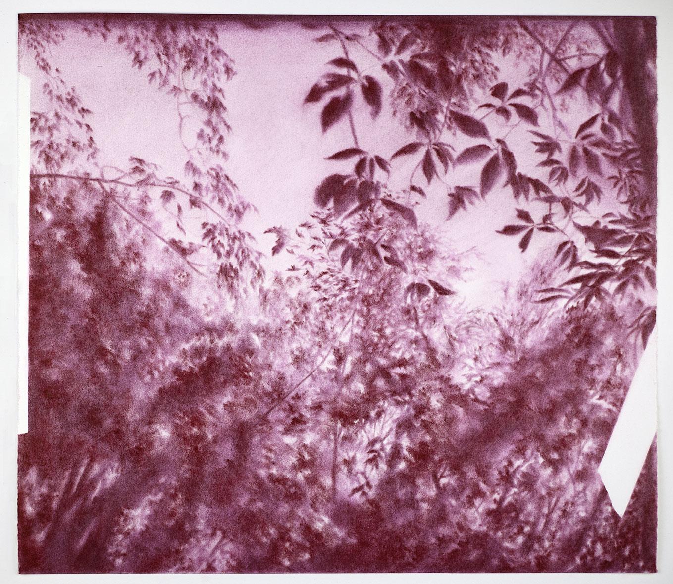 """Andréanne Godin,  Poussière de crépuscule ( from the series  Une promenade avec Pierre),  2016, dry pigments (violet quinachridone) on Arches paper, 13"""" x 15"""" (33 x 38 cm)"""