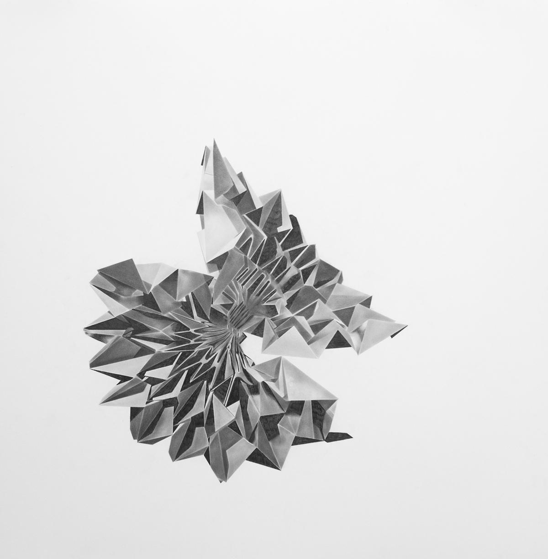 "Philippe Caron Lefebvre,  Ballard's Flora II,  2015, graphite on paper, 30"" x 30"" (76 x 76 cm)"