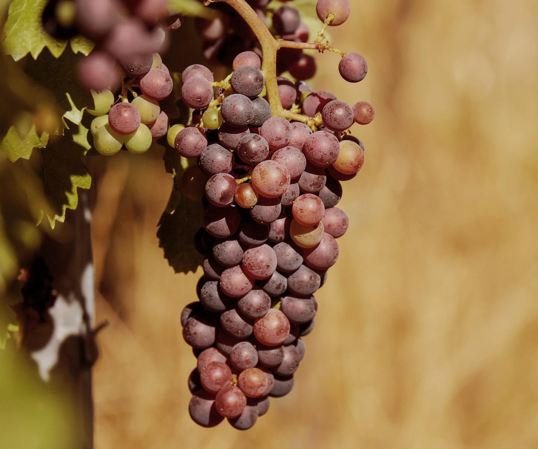 grapes-fruit-fruits-blue-162672_crop.jpg