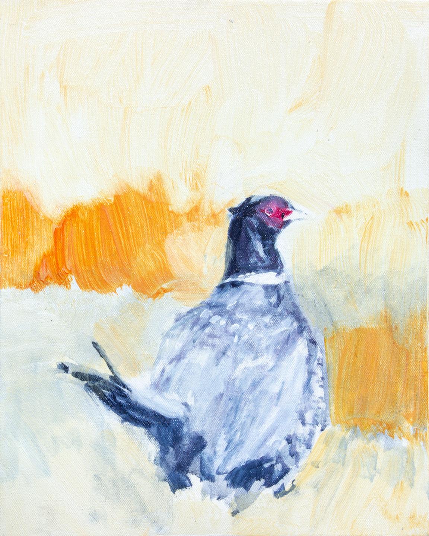 Chris-Baily-16-20-Pheasant.jpg