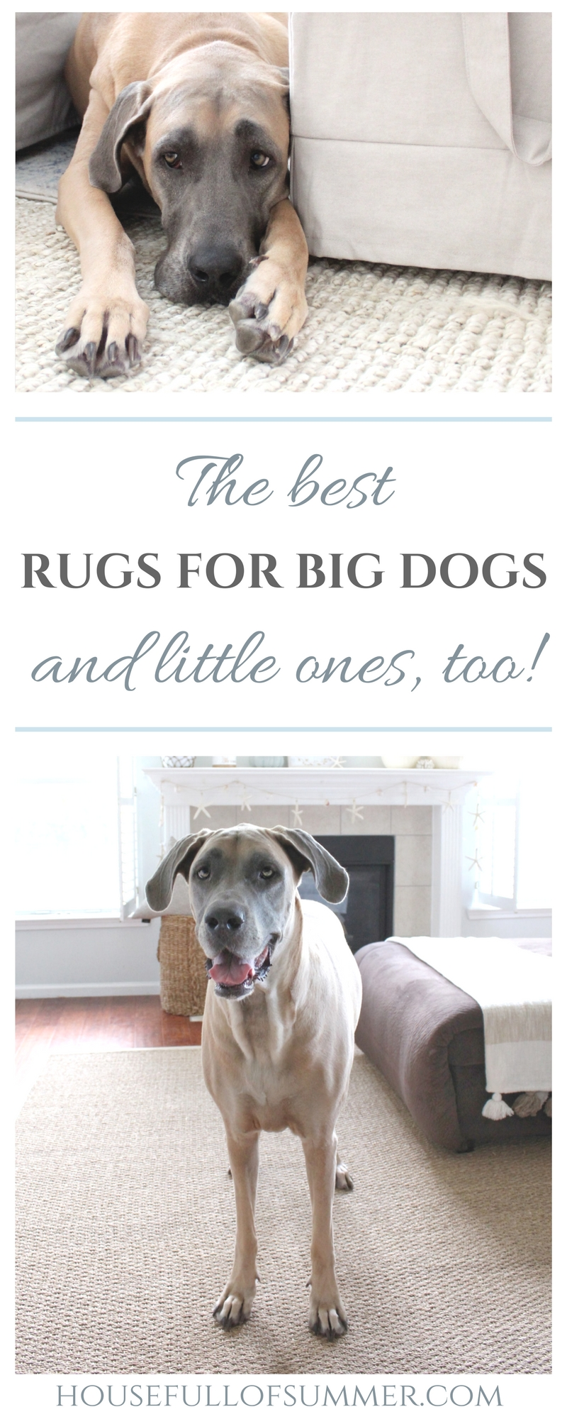 The Best Rugs for Big Dogs - and little ones, too! - House Full of Summer blog. durable rugs, area rugs, decorating with pets, dog friendly decor, home interior ideas, rugs that last, affordable rugs, neutral decor, coastal home