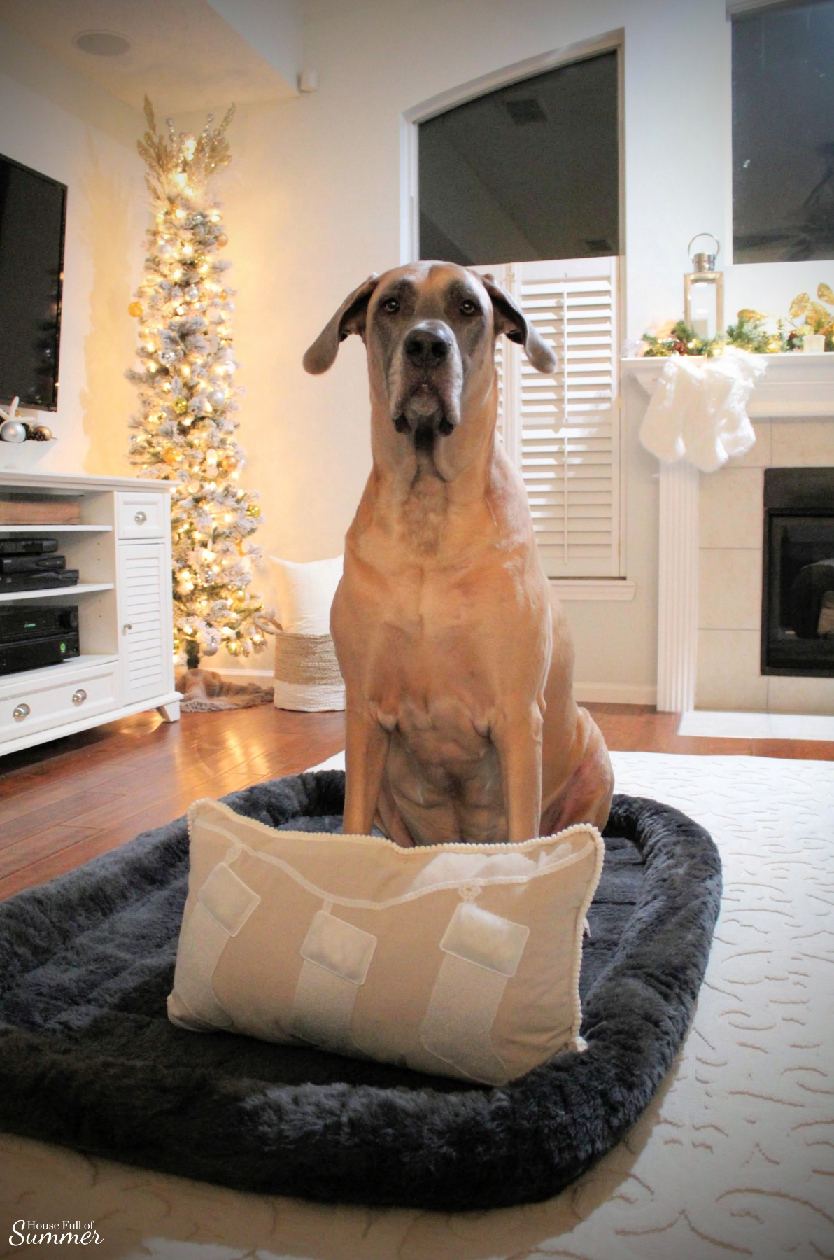 A Charming Southern Christmas Home Tour {Part 2} | House Full of Summer - Master Bedroom Christmas decor ideas, navy Christmas decorations, blue and white holiday decor, foyer, Gold Magnolias and Southern Christmas decorating ideas. XXL Dog Bed, crate liner, dog mat, Great Dane, English Mastiff, Daniff, large breed dog